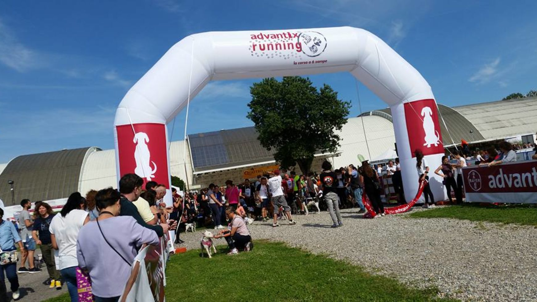 Palla a Milano alla Advantix Running: Quattrozampe in fiera 2016, due video