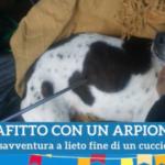 Su Rai 2 da Giancarlo Magalli c'è…..il Cane Freccia ! (video con Monica Pais e Gabriella Manca)