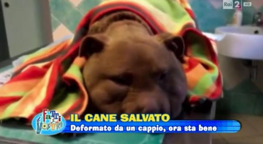"""Il cane Palla e Monica Pais ospiti su Rai 2 al programma di Giancarlo Magalli , """"I Fatti Vostri"""""""