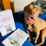 Storia del cane che non voleva più amare – secondo libro di Monica Pais